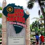 Navigating the Best Day Possible at Lion Country Safari in West Palm Beach, Florida