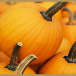 Picking A Perfect Pumpkin and What to Do and Eat Afterwards